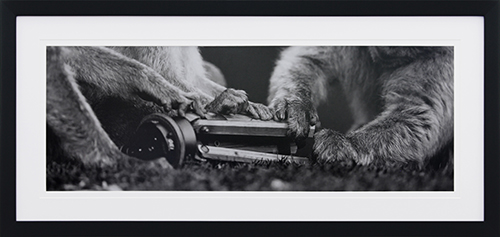 Canine life VII