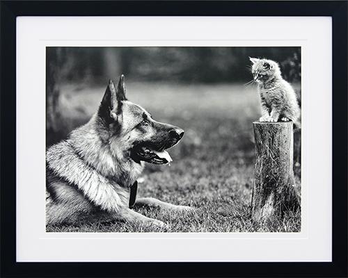 Canine life IX
