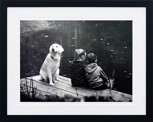 Canine life VIII