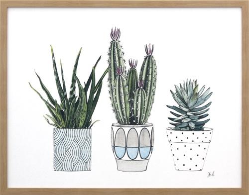 Spiny Desert Plants I