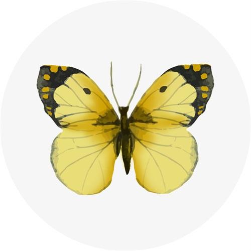 Butterfly Specimen III