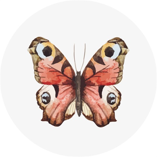 Butterfly Specimen V