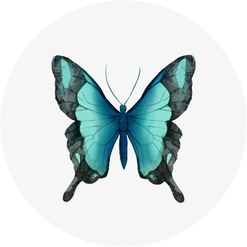 Butterfly Specimen VI
