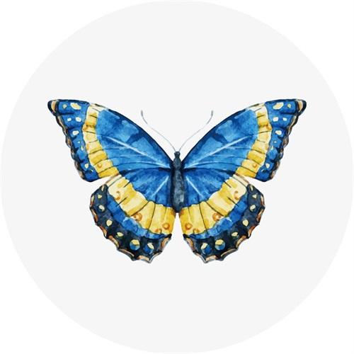 Butterfly Specimen VIII