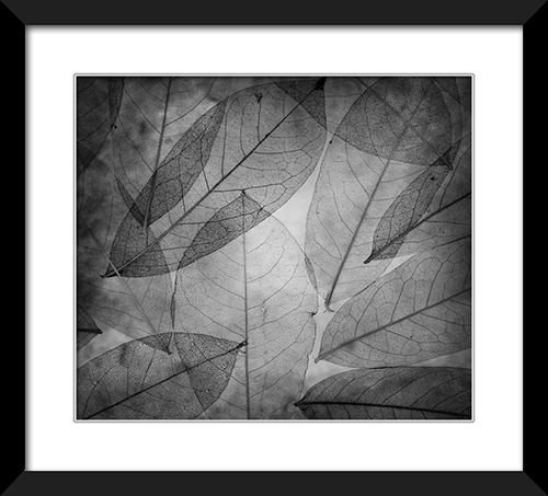 Leaves X
