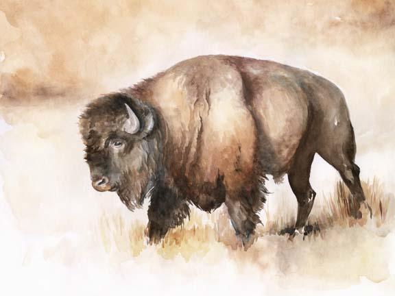 Buffalo Roam I