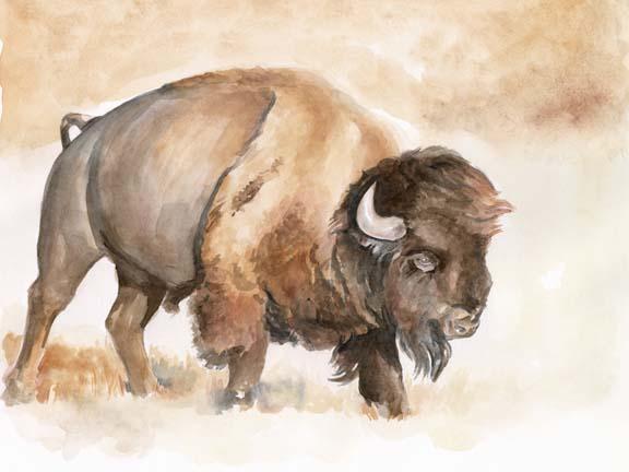 Buffalo Roam II
