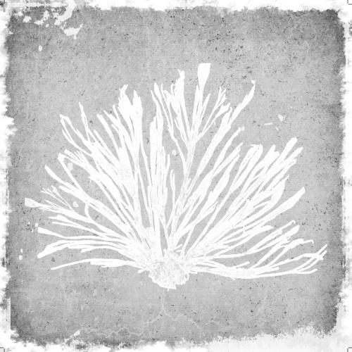 Gray Coral Ⅱ
