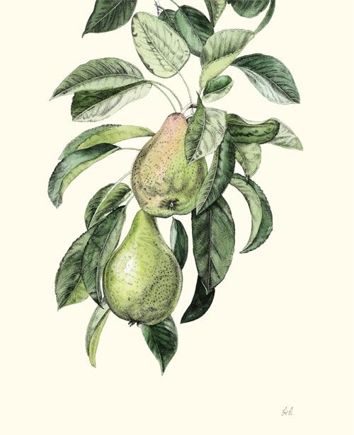 Fruit Realistic IV