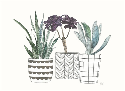 Spiny Desert Plants IV