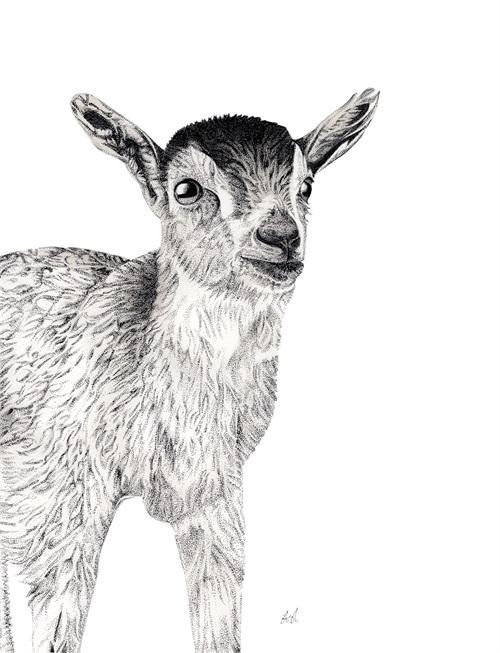 B & W Animal Portrait III