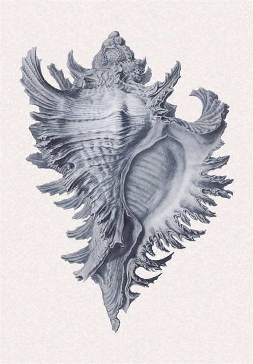 Indigo Shell