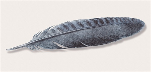Tribal Feather IV