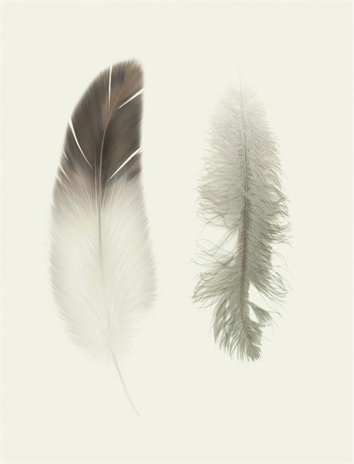 Soft Feathers I