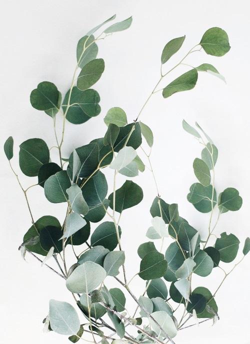Watermark Foliage I
