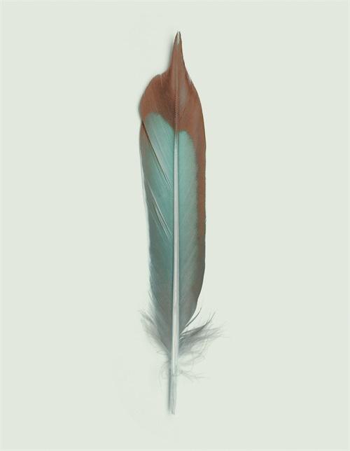 Soft Feathers II