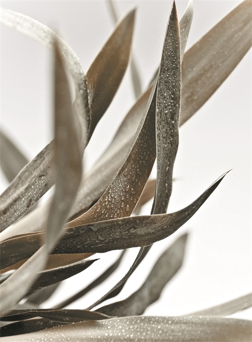 Watermark Foliage VI