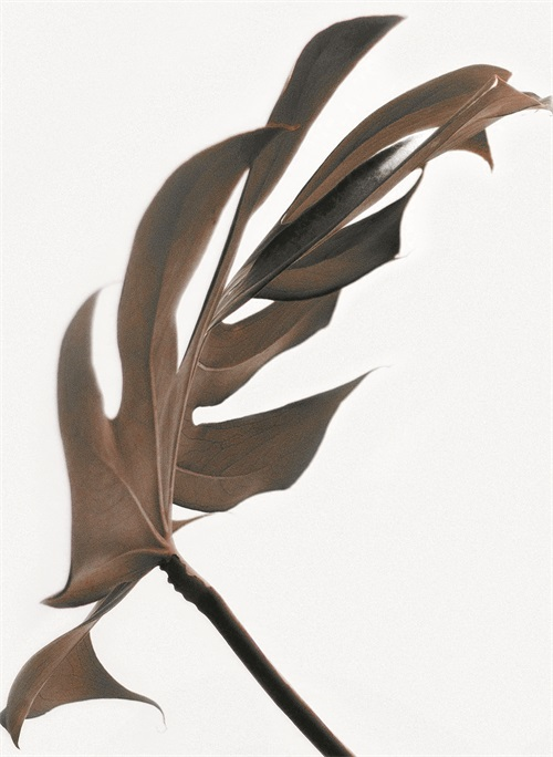 Watermark Foliage II