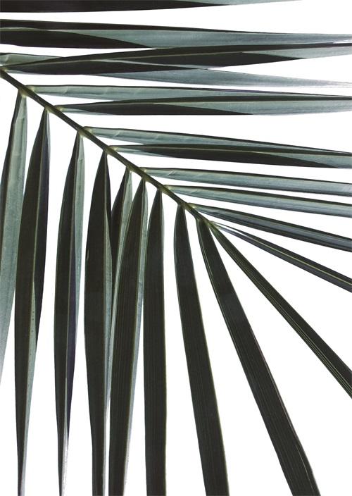 Coconut Leaves II