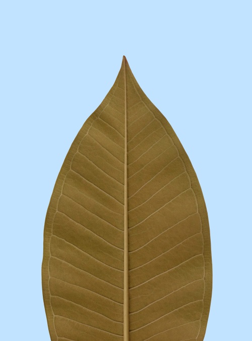 Leaf Craft Painting IV