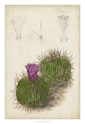 Antique Cactus II