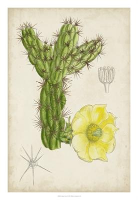 Antique Cactus I