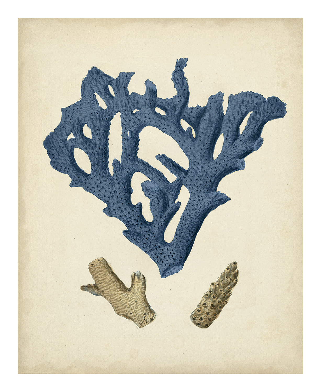 Indigo Coral VII