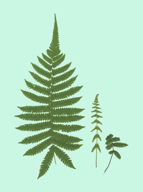 Leaf Craft Painting VIII