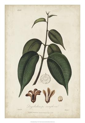 Medicinal Botany IV