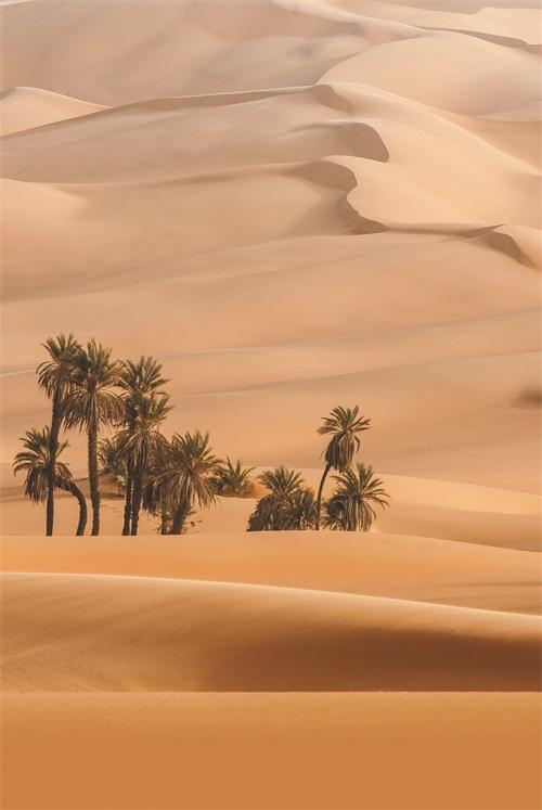 Views of Desert VI