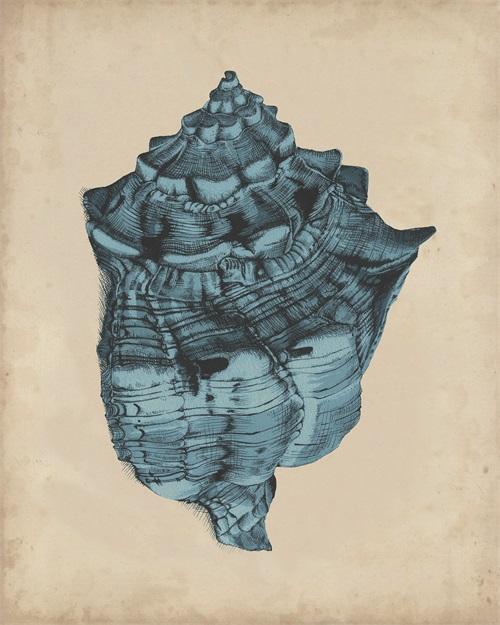 Indigo Shells II