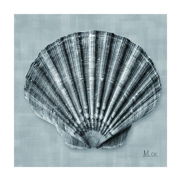 Shell V