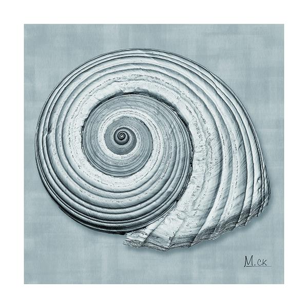 Shell IV