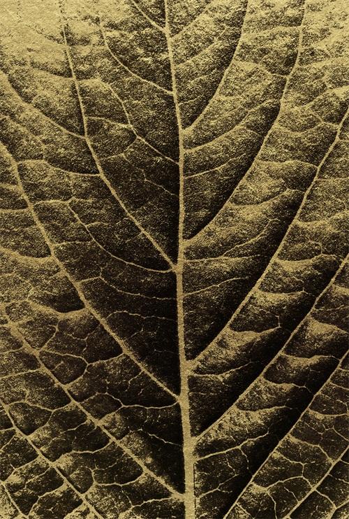 Black And Golden Plants IV
