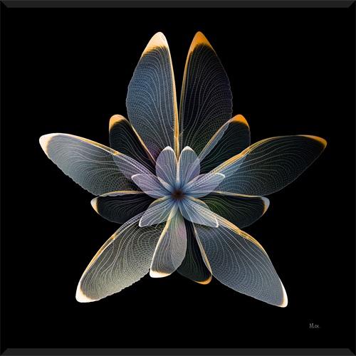 Nighttime Flora II