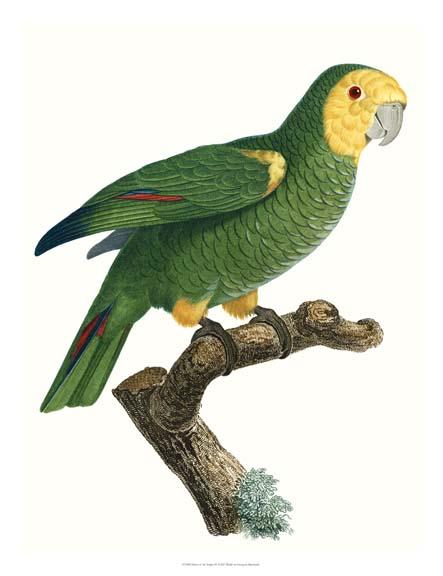 NEW Parrot of the Tropics IV