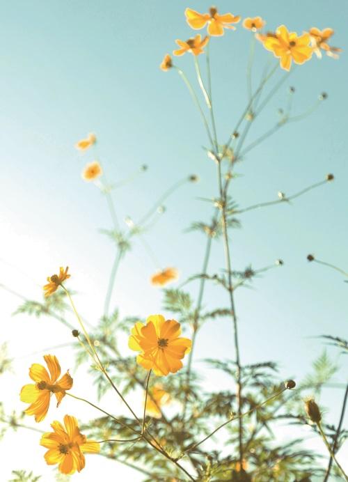 Bright Wild Flowers V