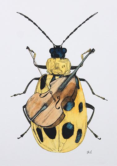 Beetle Study II