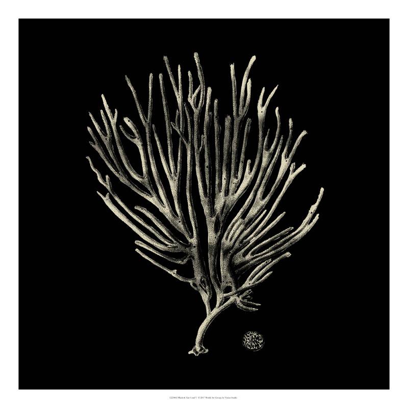 Black And Tan Coral II