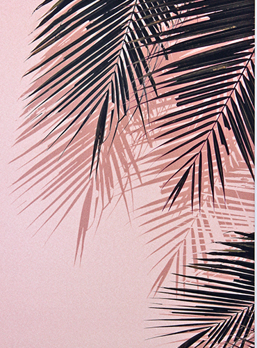 Coconut Leaves I