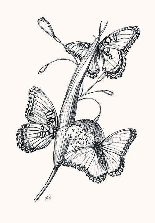 Butterfly Study VI