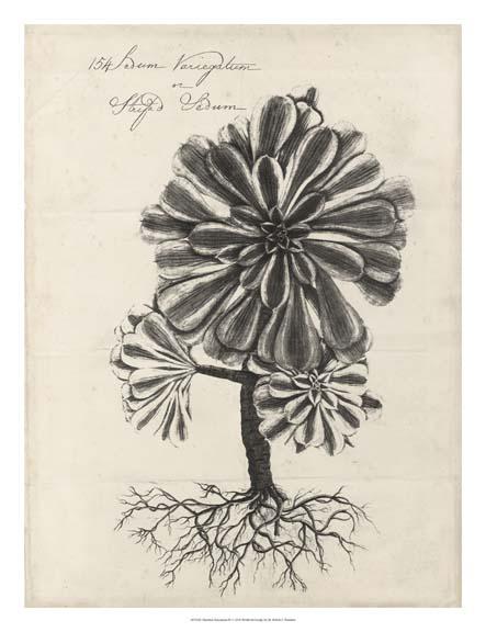 Thornton Succulents IV