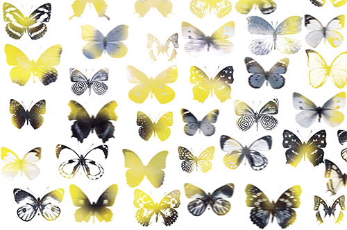 Butterfly Combination I