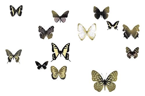 Butterfly Combination II