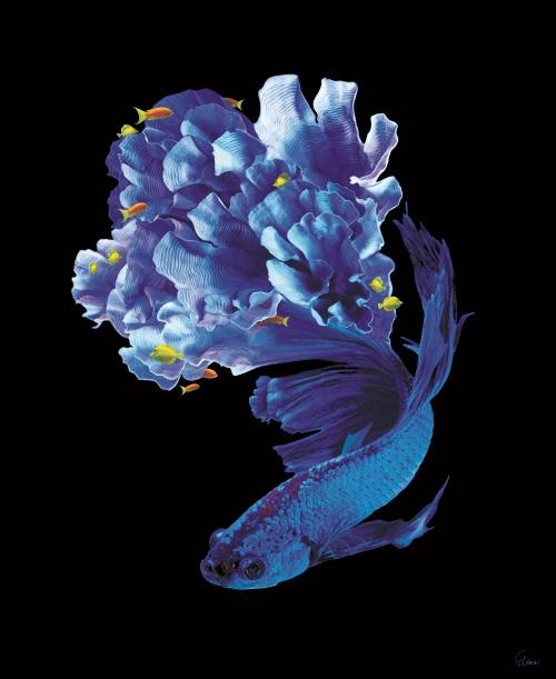 Fantasy Coral II