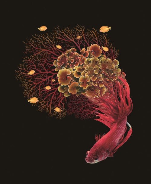 Fantasy Coral IV
