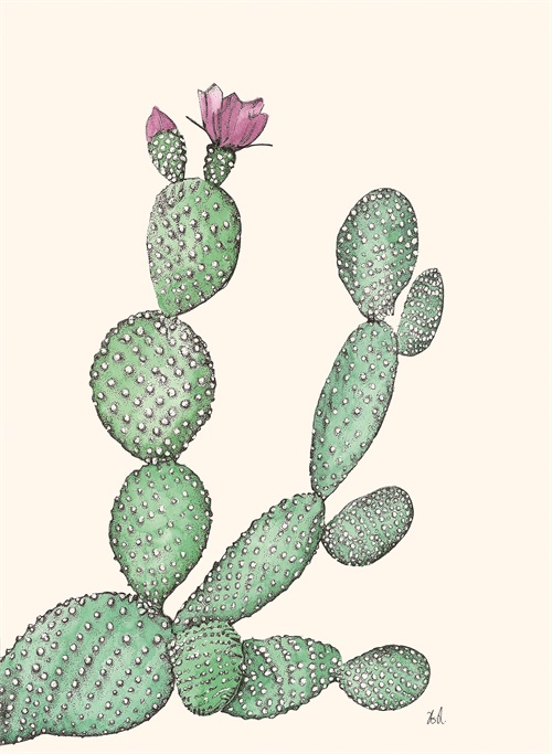 Cacti Collection II