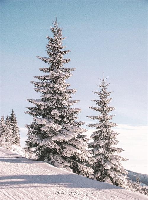 A Few Trees