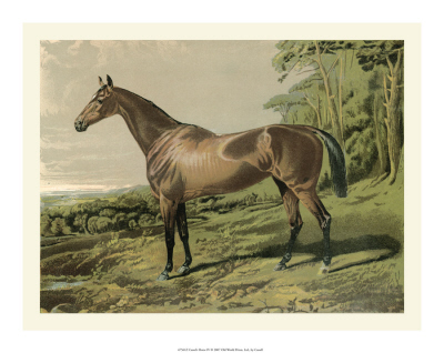Cassell's Horse Ⅳ