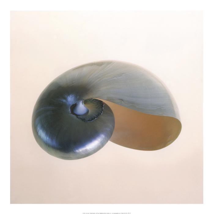 Polished Nautilus